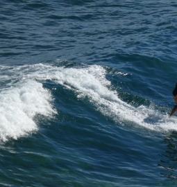 Clases de Surf en todo el sur de Tenerife