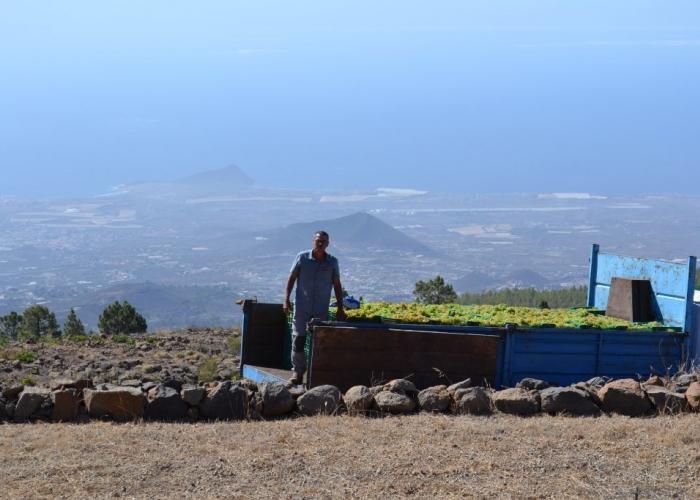 Descubre los viñedos escondidos del norte de Tenerife con este Tour