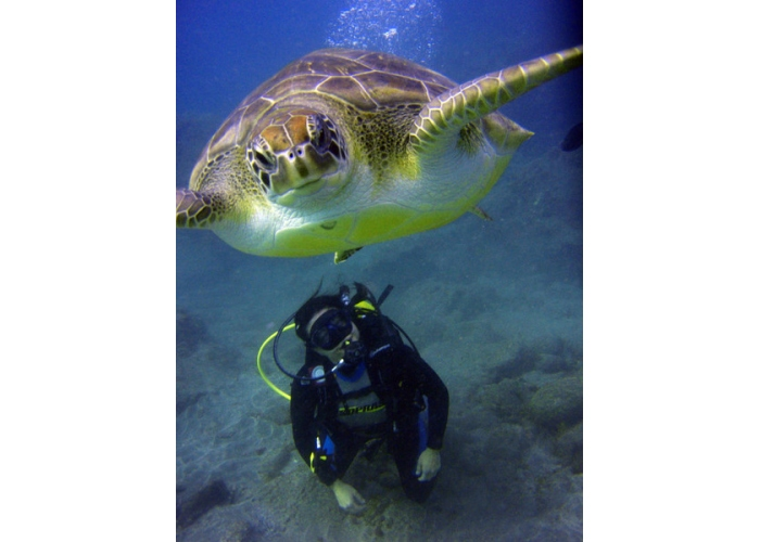 Discover scuba diving with your first dive and experience the underwater world of Tenerife
