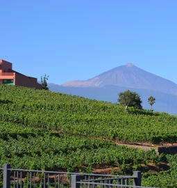 Discover the hidden wineries of the north of Tenerife with this