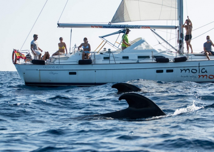 Enjoy the sky and the sea on this Teide and dolphin tour