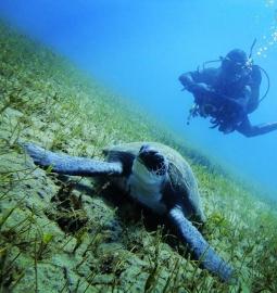 Llegue a más sitios debajo del agua con un curso de Aventurero Avanzado