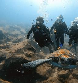 Nada y bucea con tortugas salvajes en el sur de Tenerife