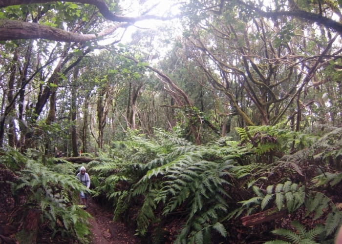 Personalized guided tour to the wild Biosphere Reserve of Anaga