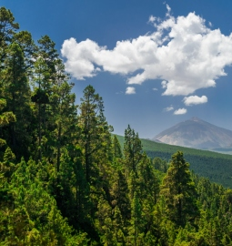 Private Tour to the green north of Tenerife and Mount Teide