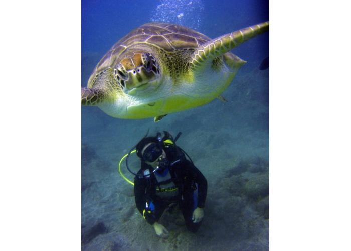 Prueba el buceo con esta inmersión de bautismo y experimenta el mundo submarino de Tenerife