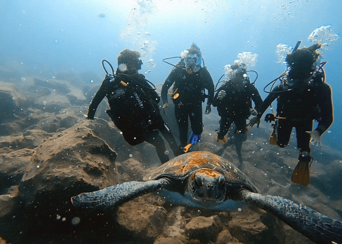 Swim and dive with wild turtles up close in the south of Tenerife
