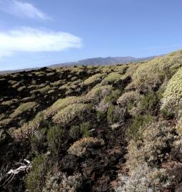 Tour guiada y personalizada al hermoso sur de Tenerife