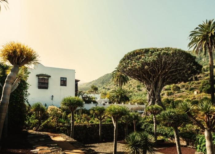 Tour guiada y personalizada para explorar la cultura del norte verde de Tenerife