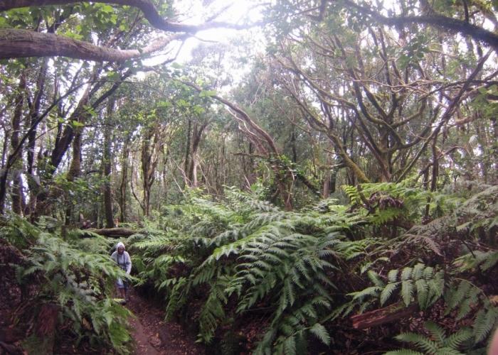 Tour guiado y personalizado a la Reserva de la Biosfera salvaje de Anaga