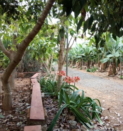 Tour of a Banana plantation with sampling of local delicacies