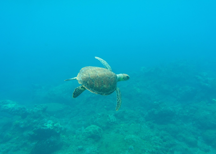 Whale and dolphin watching + snorkeling with turtles in the south of Tenerife