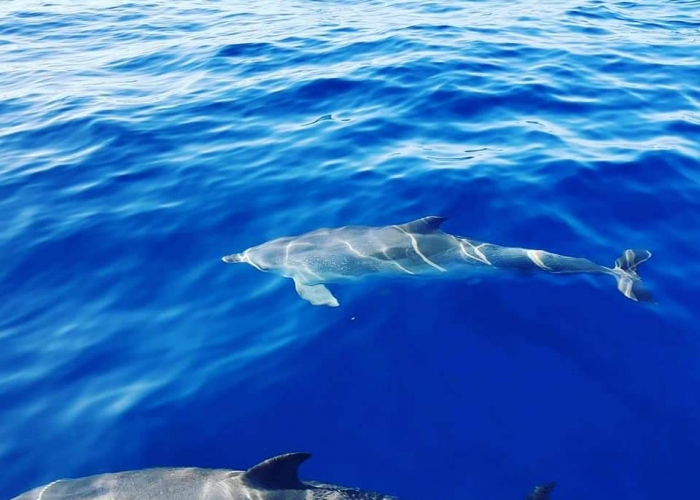 Whale and Dolphin watching with a local skipper in the south of Tenerife